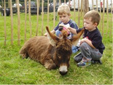Boys grooming our donkey