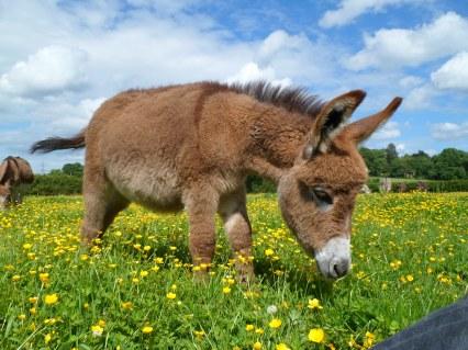 Miller's Ark Sells Donkeys