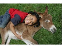 Fun cuddles with donkeys