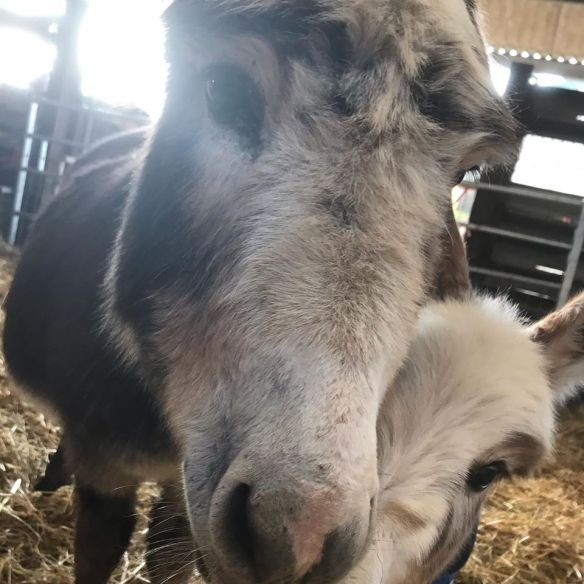 Pasanda our latest foal 0220 1
