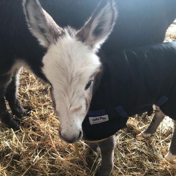 Pasanda our latest foal 0220
